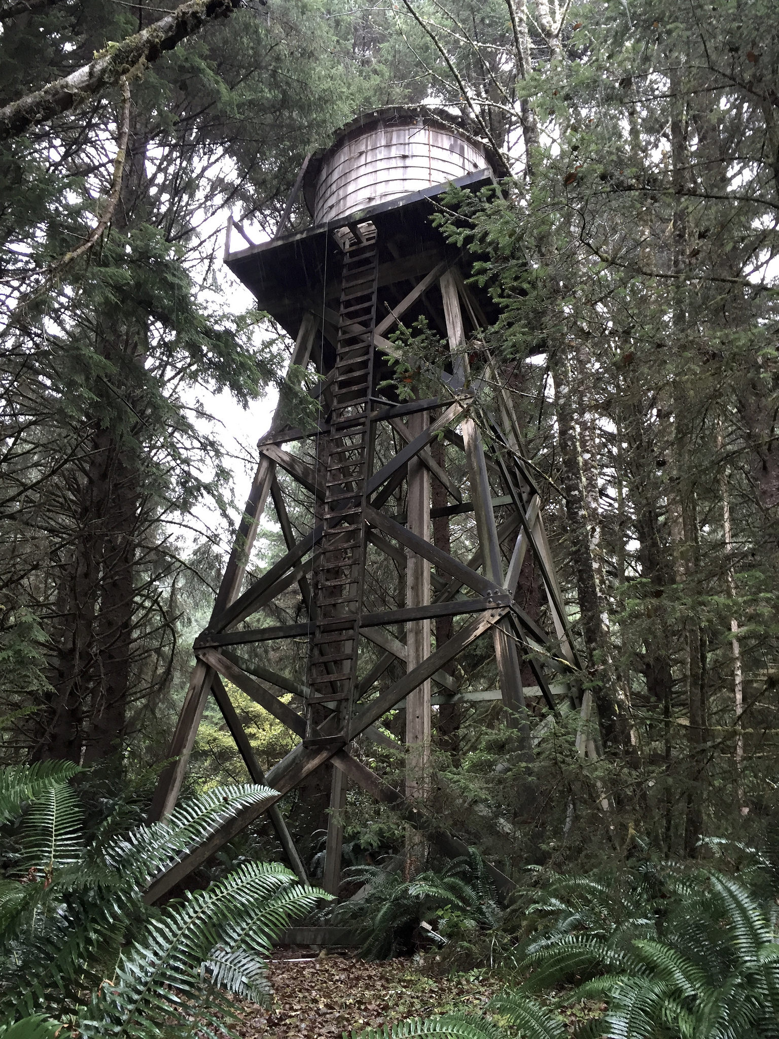 Forest Water Tower
