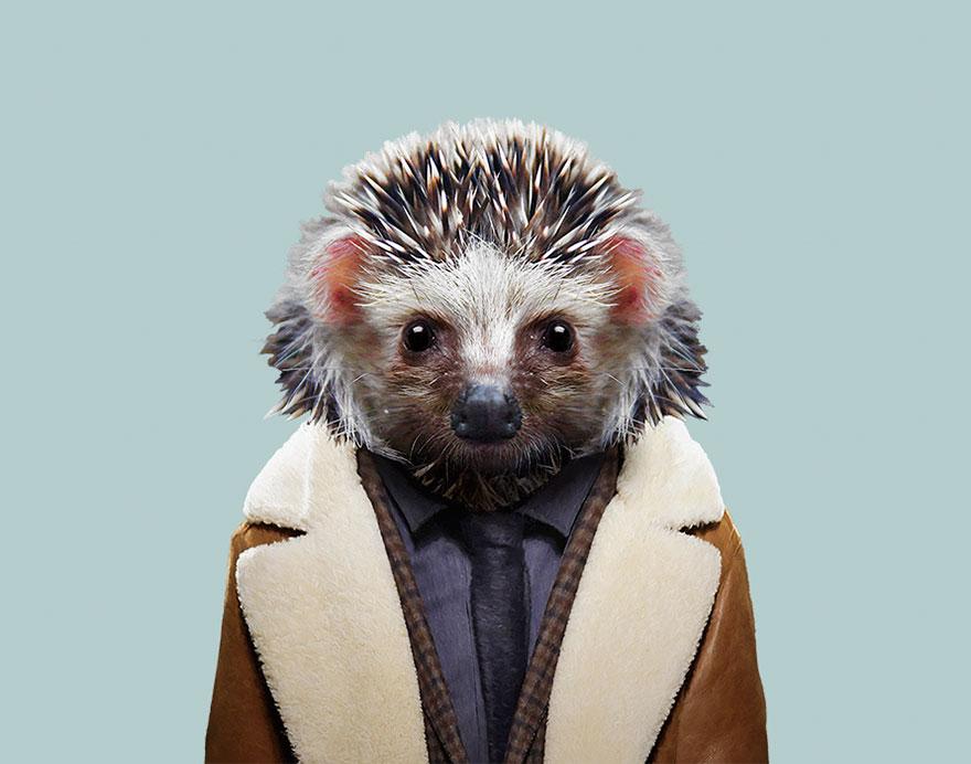 desert hedgehog.jpg