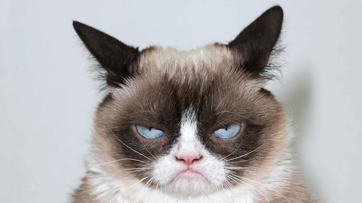 https _cdn.cnn.com_cnnnext_dam_assets_190517103414-01-grumpy-cat-file-restricted.jpg