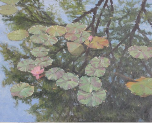 Lily Pads with Tree Reflection