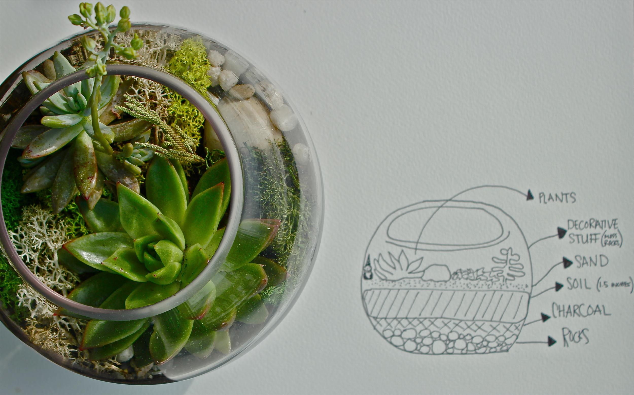 tarrarium.jpg