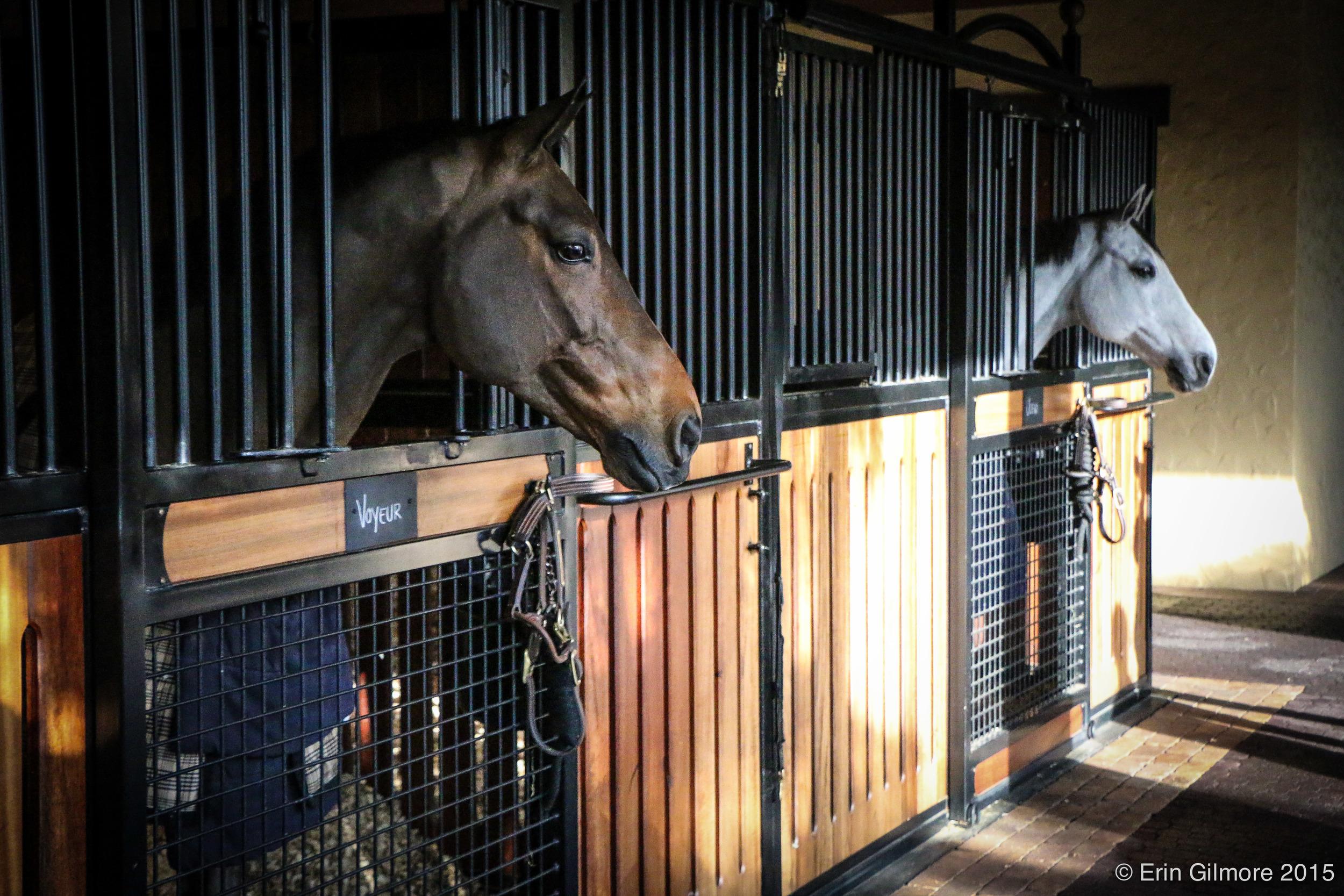KentFarrington-horses-3.jpg