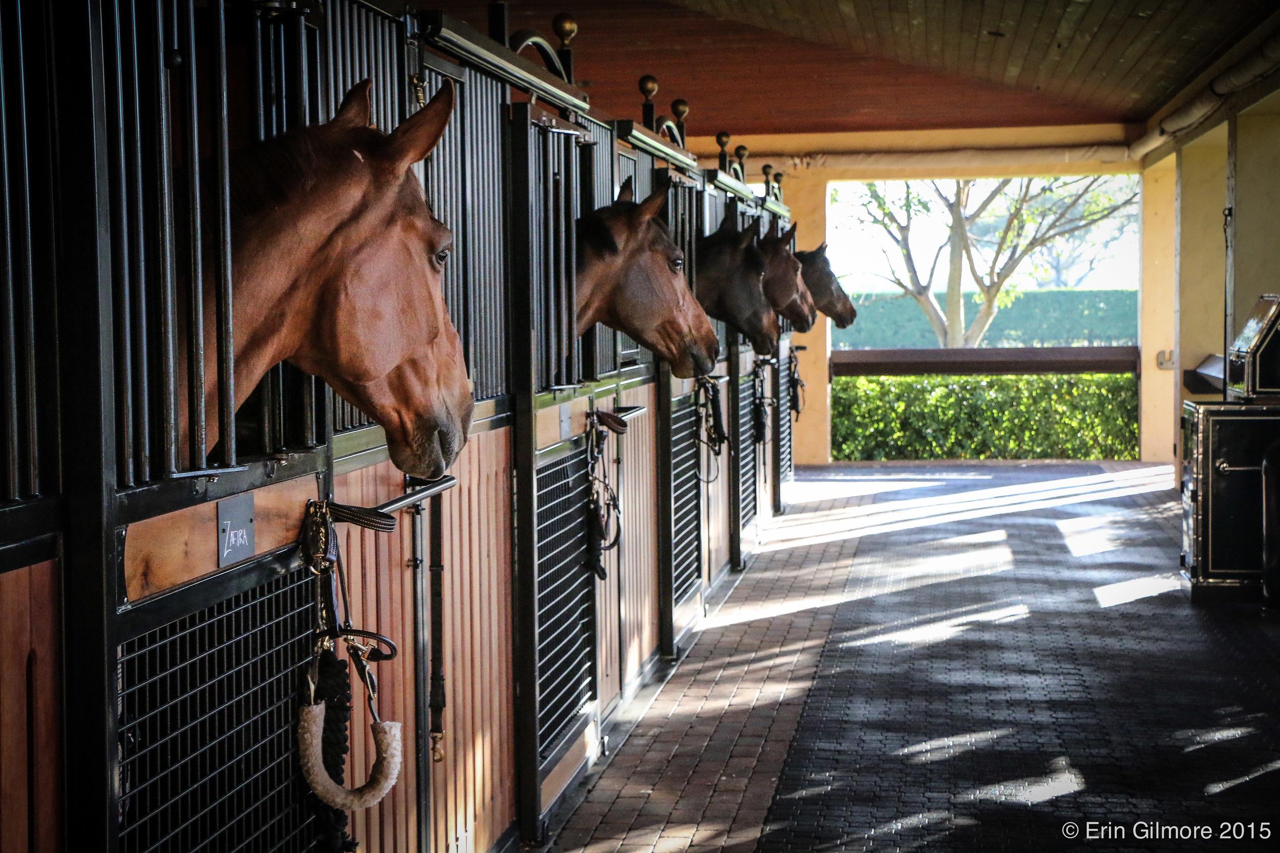 KentFarrington-horses.jpg