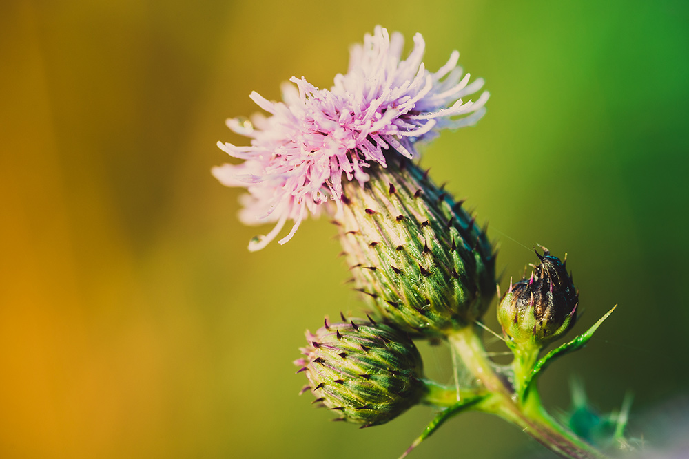 Macro photography uses special lenses to achieve focus much closer than normal lenses will allow taking closeups to an extreme. Alternatively, if you can, move the subject further away from the background for a similar effect.