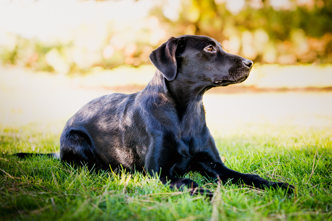 Helen Duffy & Katie - I would highly recommend Simon, he was full of brilliant ideas and captured some beautiful shots of my puppy.Google review - 5/5