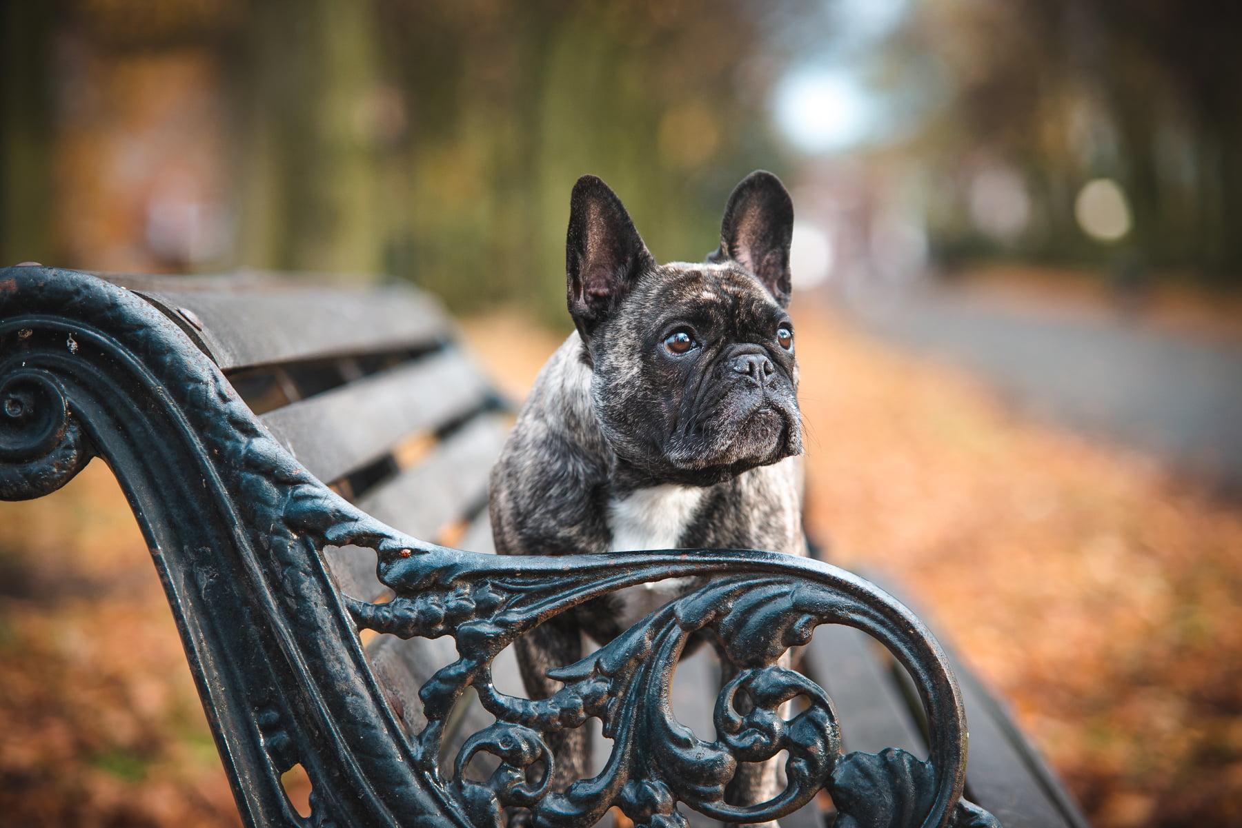 Autumn park bench dog photo - Copyright 2018 Diffuse Photo