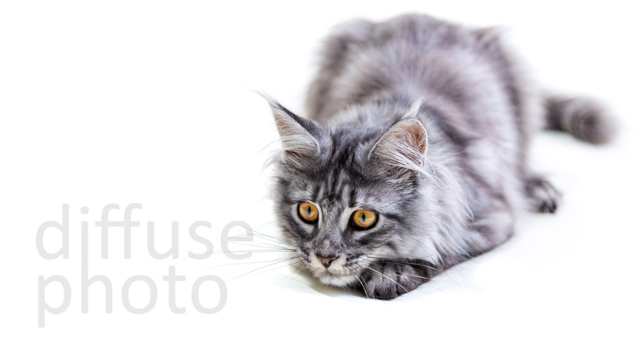 Muezza Foods - Excellent service from Simon and Kerri. The photos were perfect for our intended purpose. Our kitten adapted well and was very relaxed all throughout her photoshoot. Highly recommended.Facebook review - 5/5