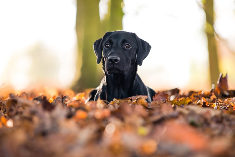 Use fallen leaves as a prop for your photography with children and dogs.