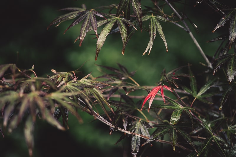 Capture early changes with pops of colour contrast like this one red leaf among a green plant.