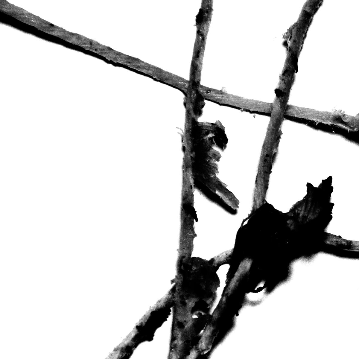 Untitled (strings #4), 2013