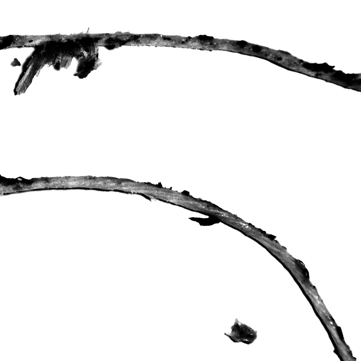 Untitled (strings #2), 2013