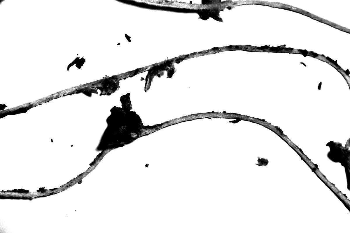 Untitled (strings #5), 2013