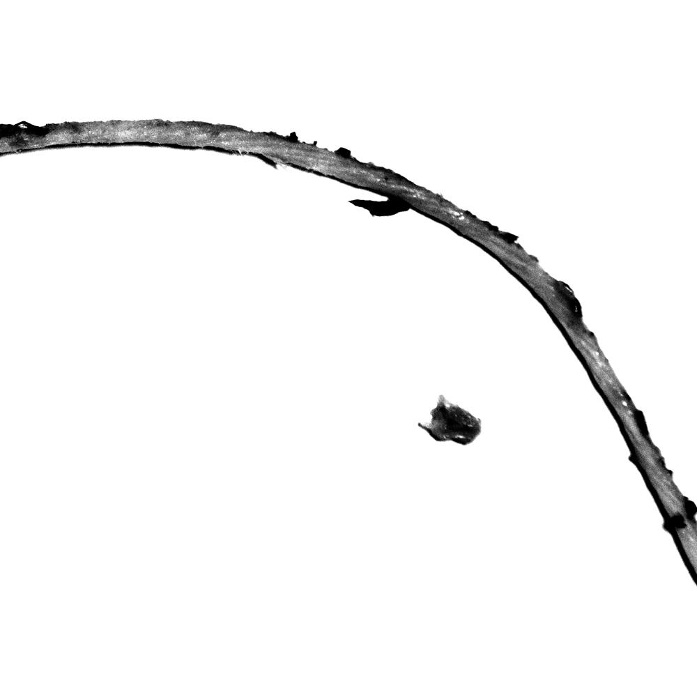 Untitled (strings #1), 2013
