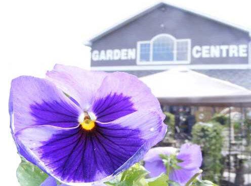 Spruce It Up Garden Centre Spruce It Up Calgary S Full Service Garden Centre