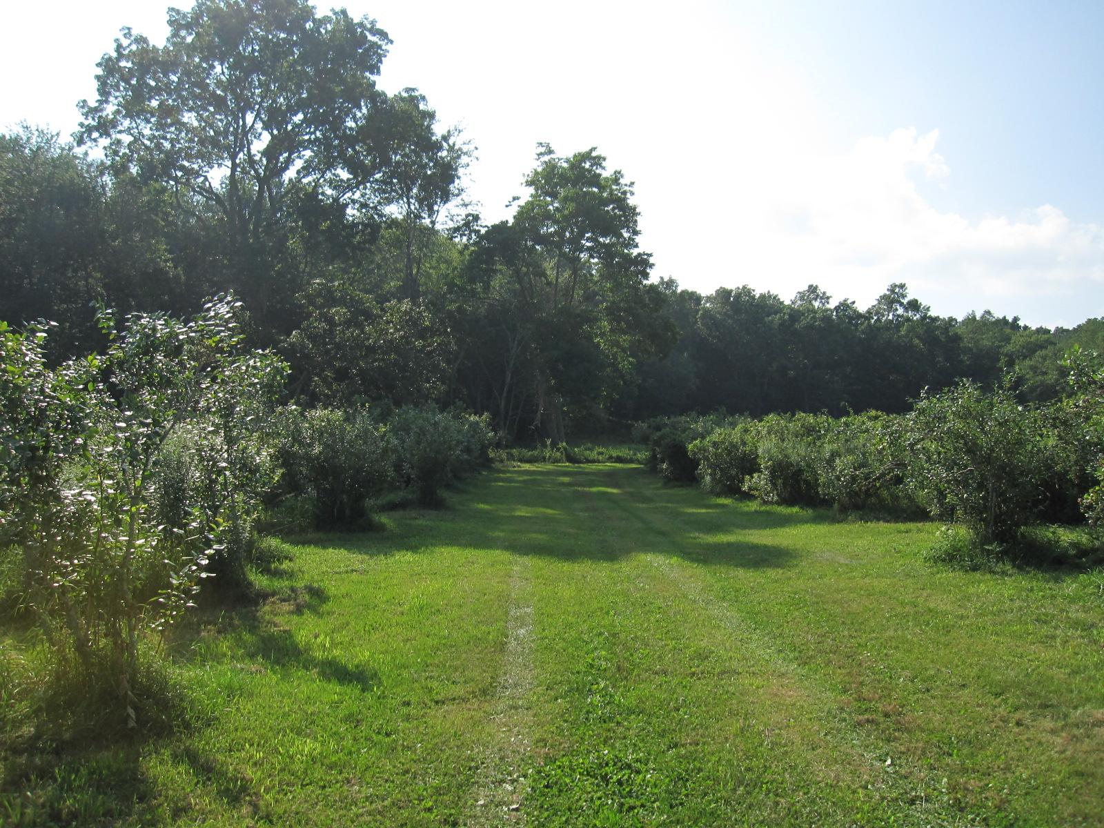 Blueberry Farm 069.jpg