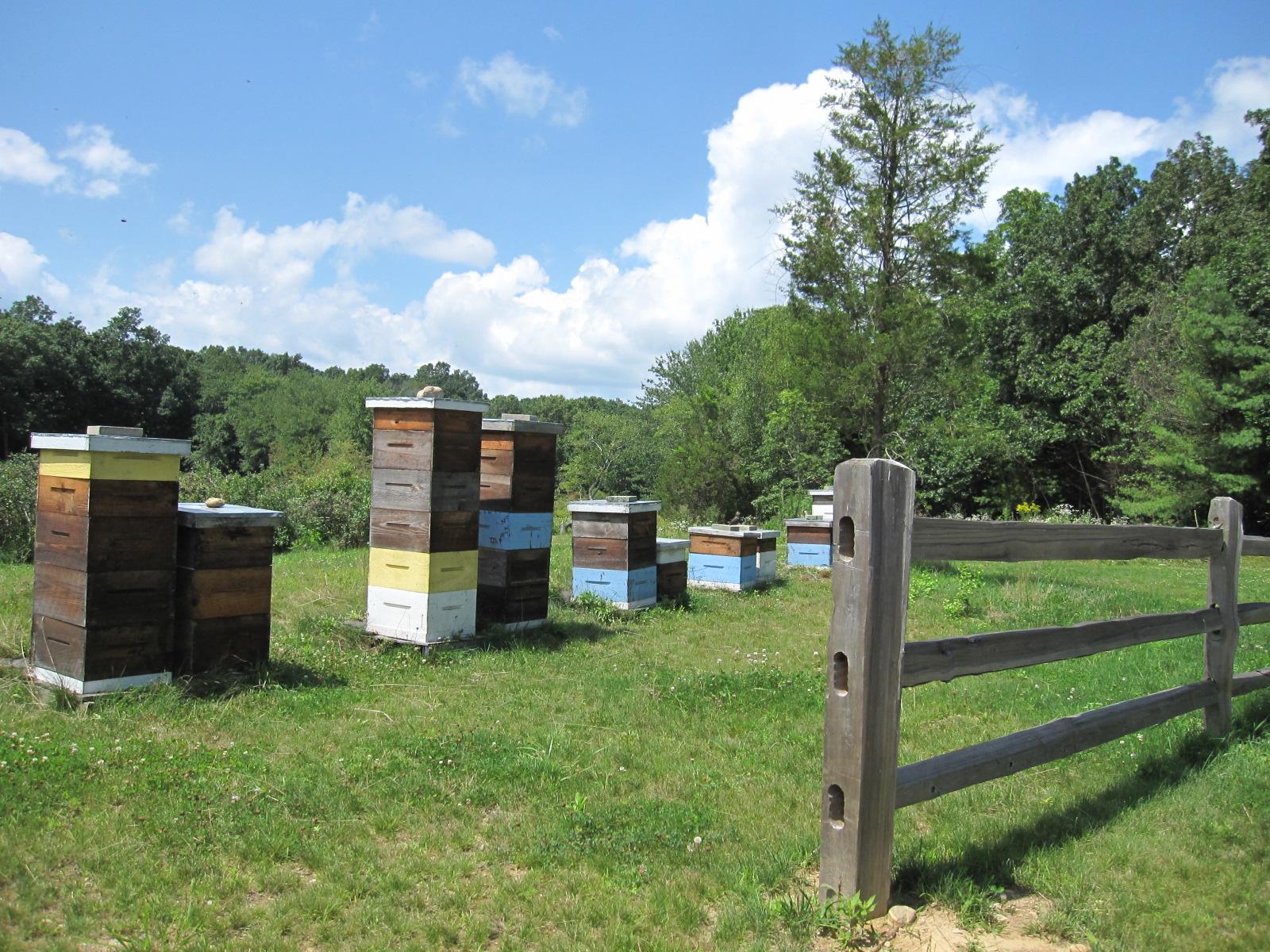 Blueberry Farm 029.jpg