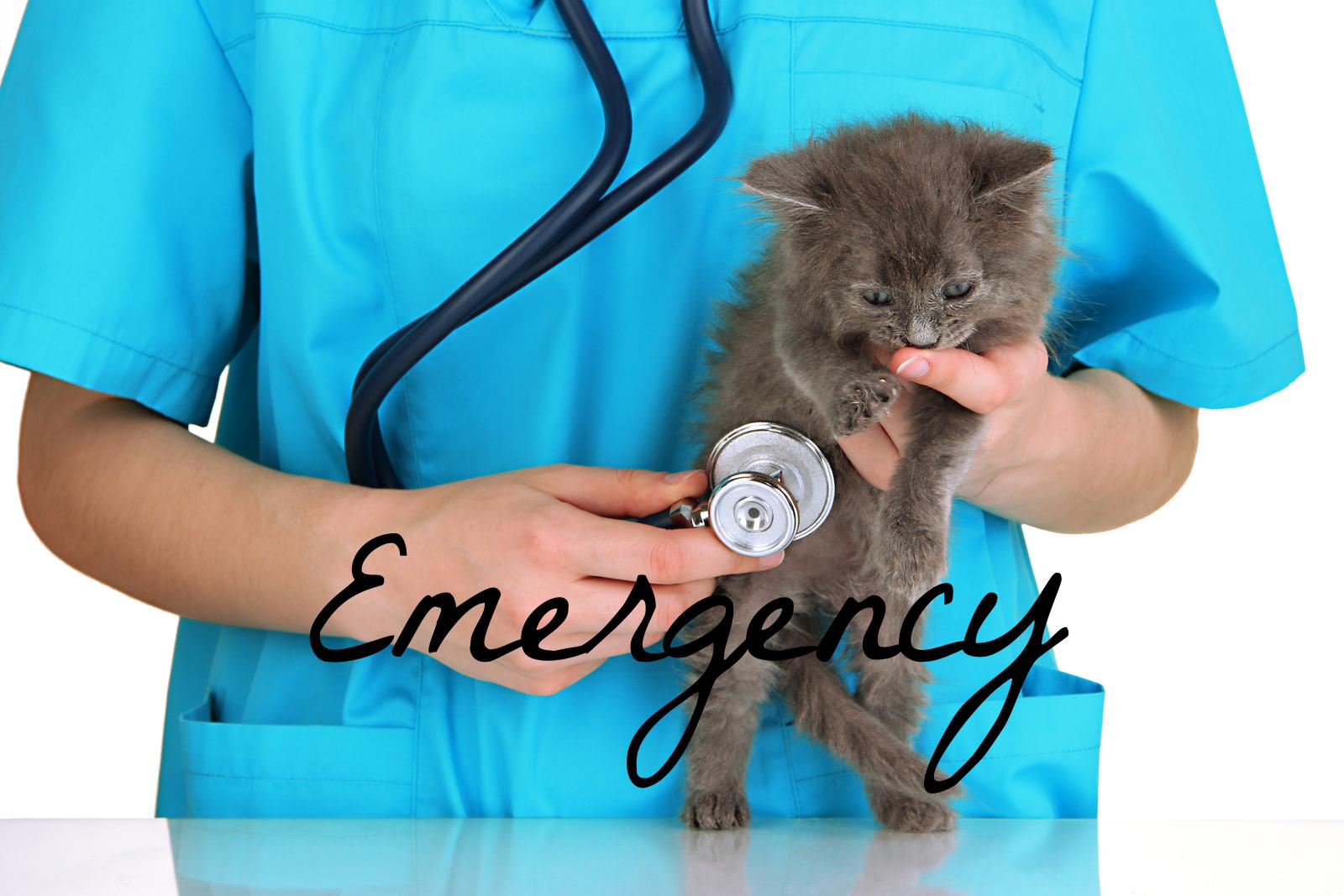 TVRH holly springs emergency triangle veterinary referral hospital