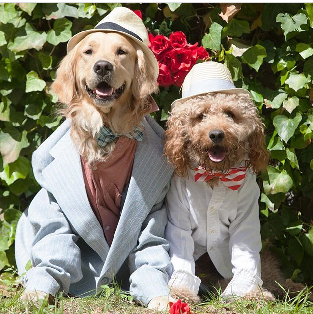 Dapper Dog Costume