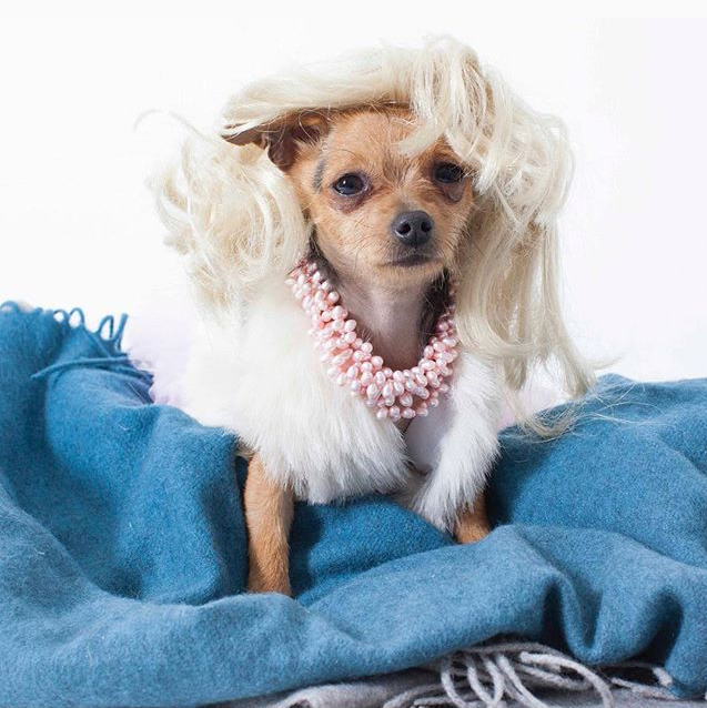Marilyn Monroe dog costume
