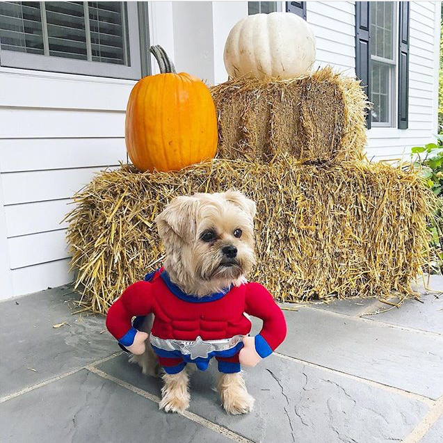 Superhero dog costume