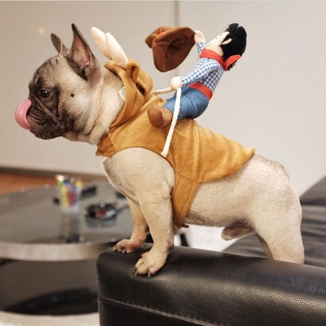 Toy Story dog costume