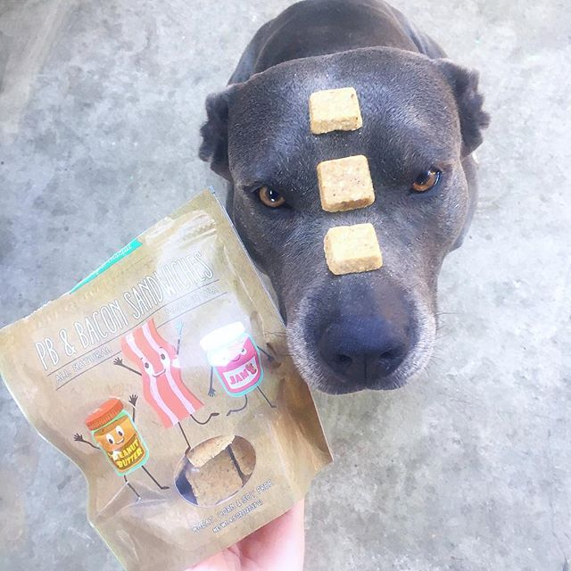 Anyone else's dog Obsessed with Peanut Butter? These were a big hit at Casa de Bentley! We got them in our @superchewer box. . . You can order your own @superchewer box by clicking the link in my bio and using code:PITBULLFRIEND to get a free extra month with a 6 or 12 month subscription.