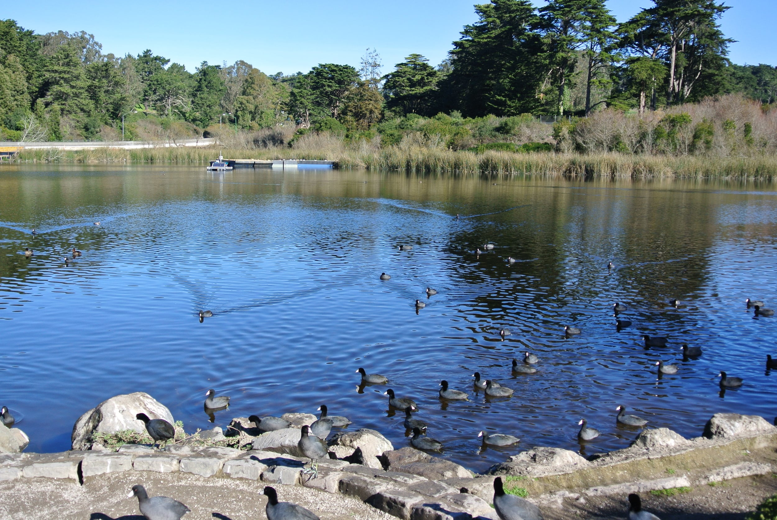 Mountain Lake Park features a playground, dog park, duck pond and tennis courts, not to mention easy access to Presidio national park.