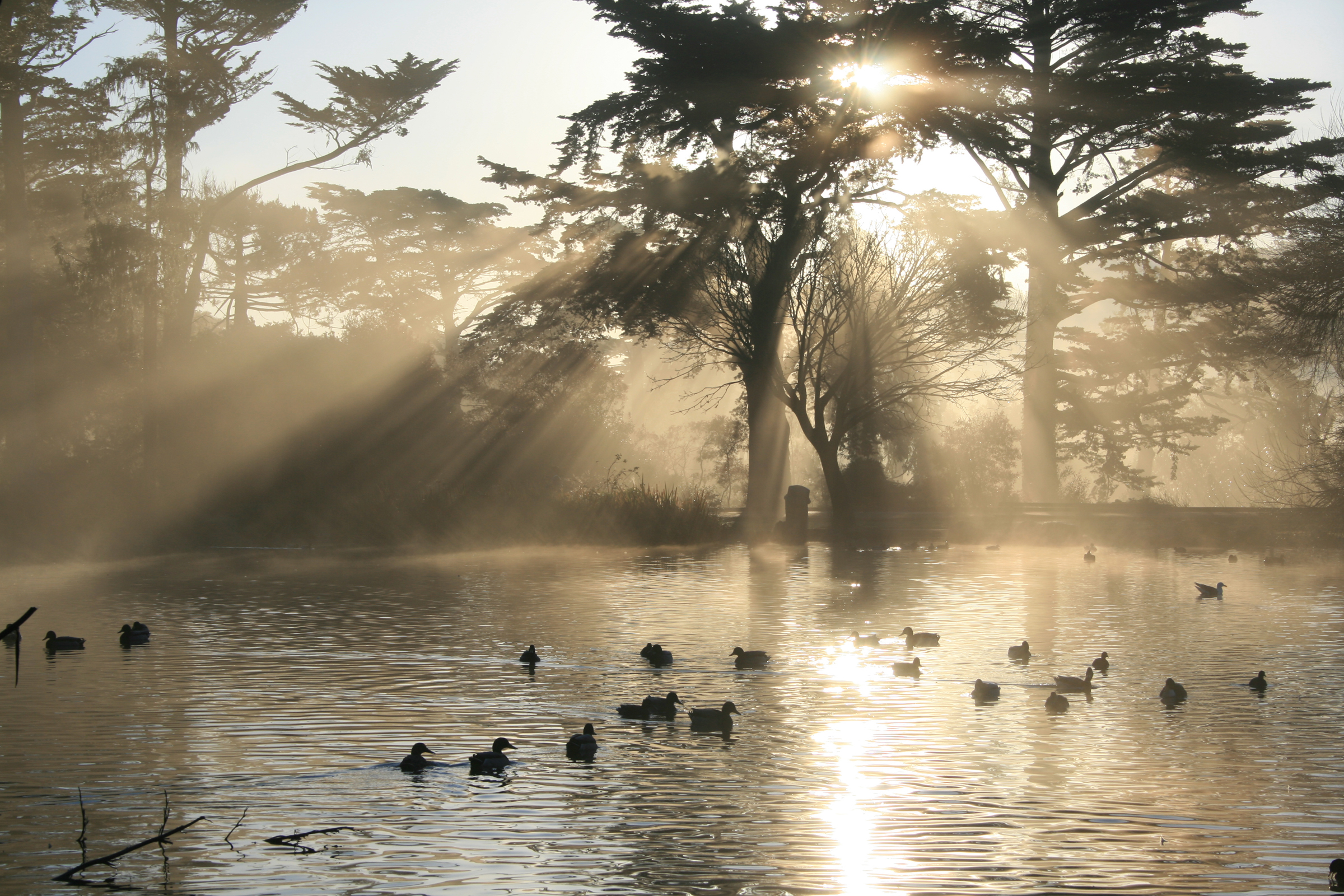 Residents enjoy the plentiful hiking trails, lakes, picnic spots and renowned museums that are sprinkled throughout Golden Gate Park.