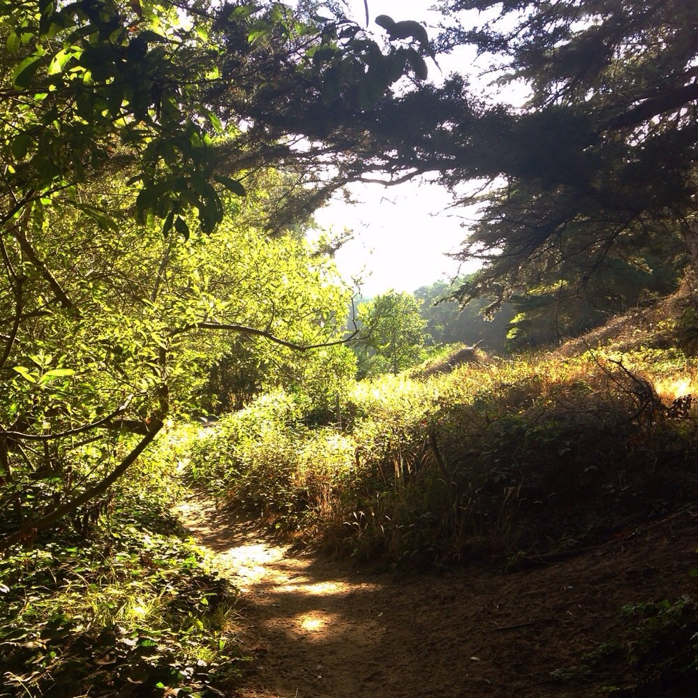 Home to a variety of migratory bird species, Pine Lake Park is encircled by a trail that leads to Stern Grove.