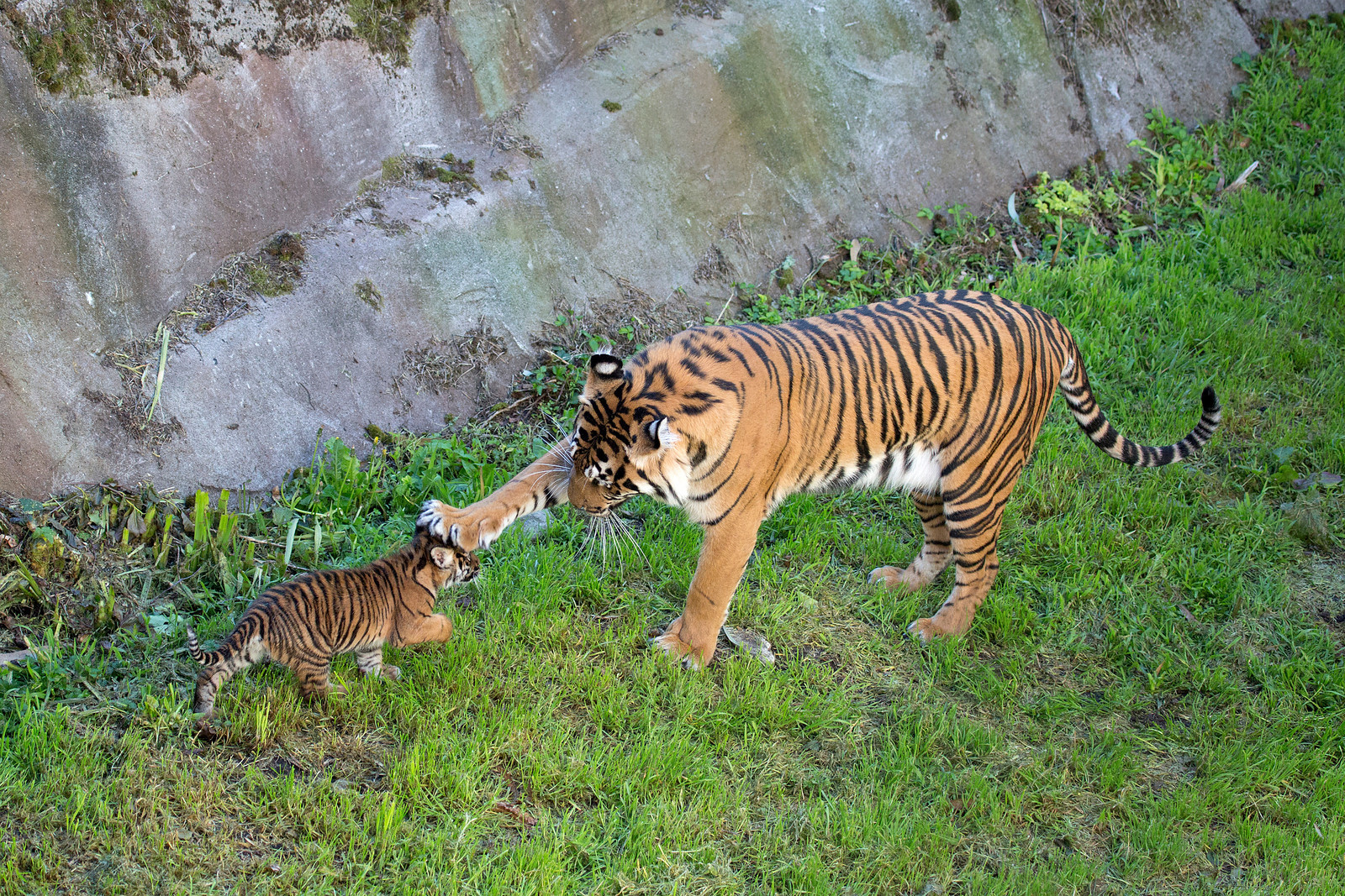 The San Francisco Zoo, located near the Great Highway, is home to more than 1,000 exotic, endangered and rescued animals.