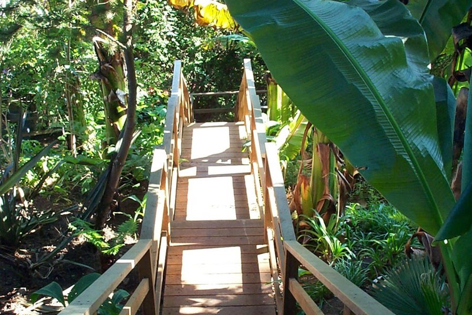 Stretching from Laidley to Beacon Streets, the 241 Harry Steps are engulfed in a jungle of banana trees, vines and palm trees.