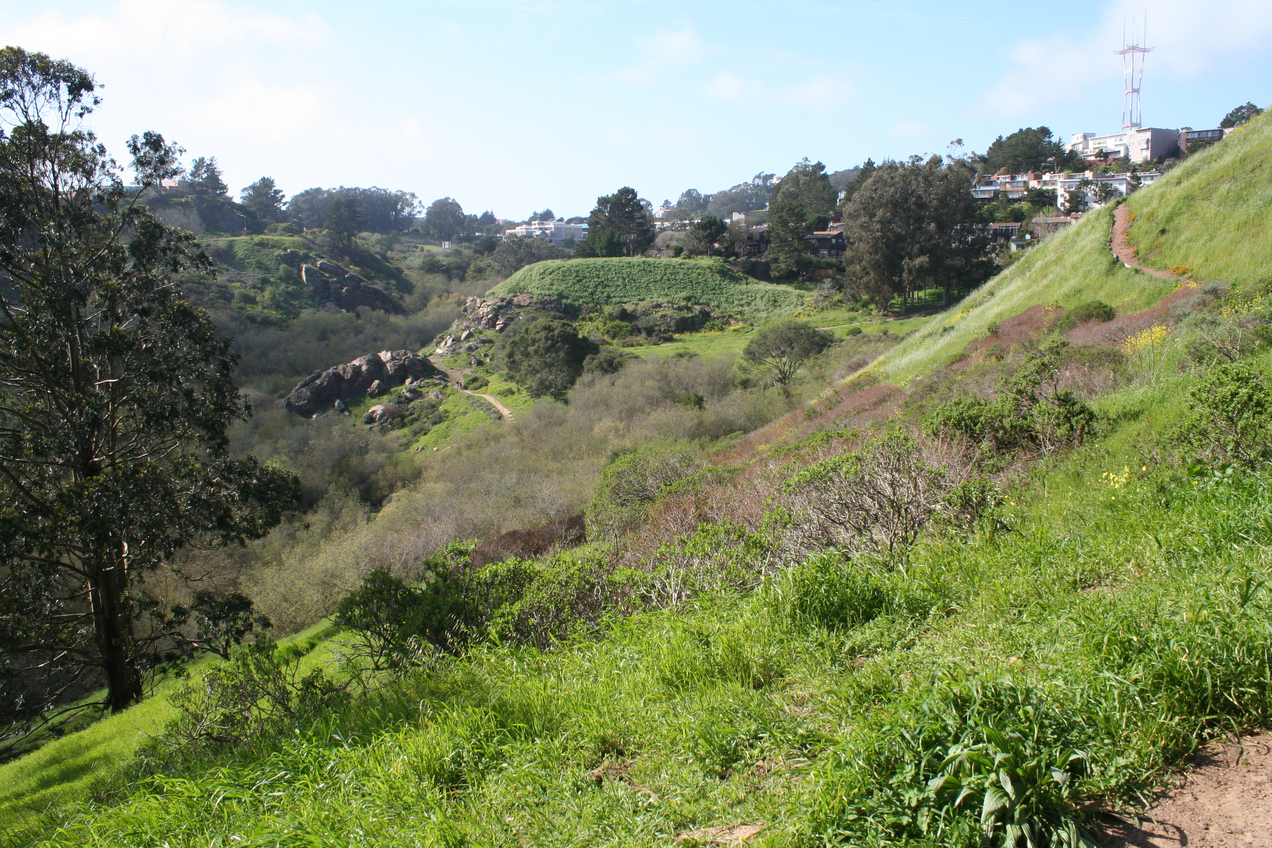 Glen Canyon Park is a 70-acre outdoor recreational area featuring a deep natural canyon with walking paths leading up into Diamond Heights.