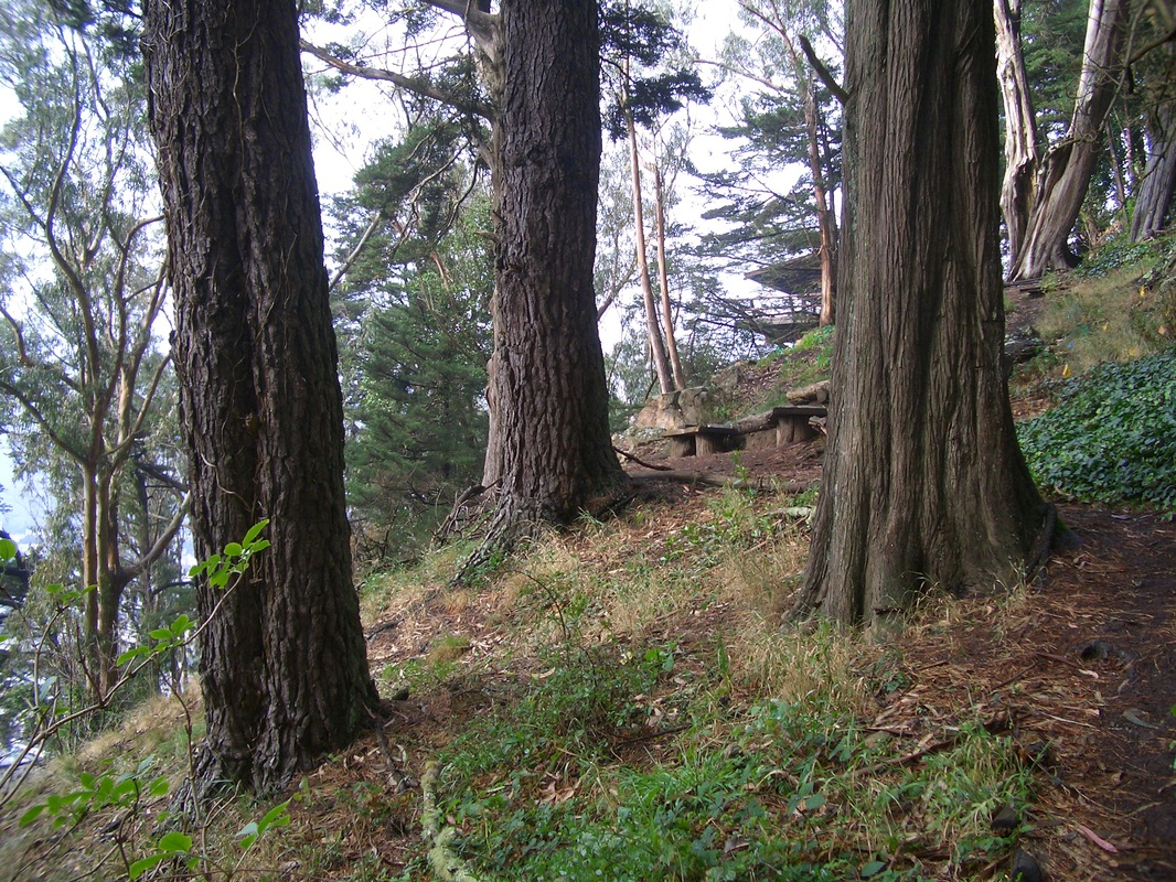 Edgehill Mountain Park is a 2-acre urban forest ideal for bird-watching and hiking.