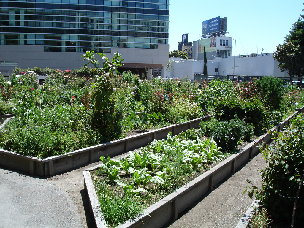 The Alice Street Community Gardens is a small, serene urban garden maintained by area residents.