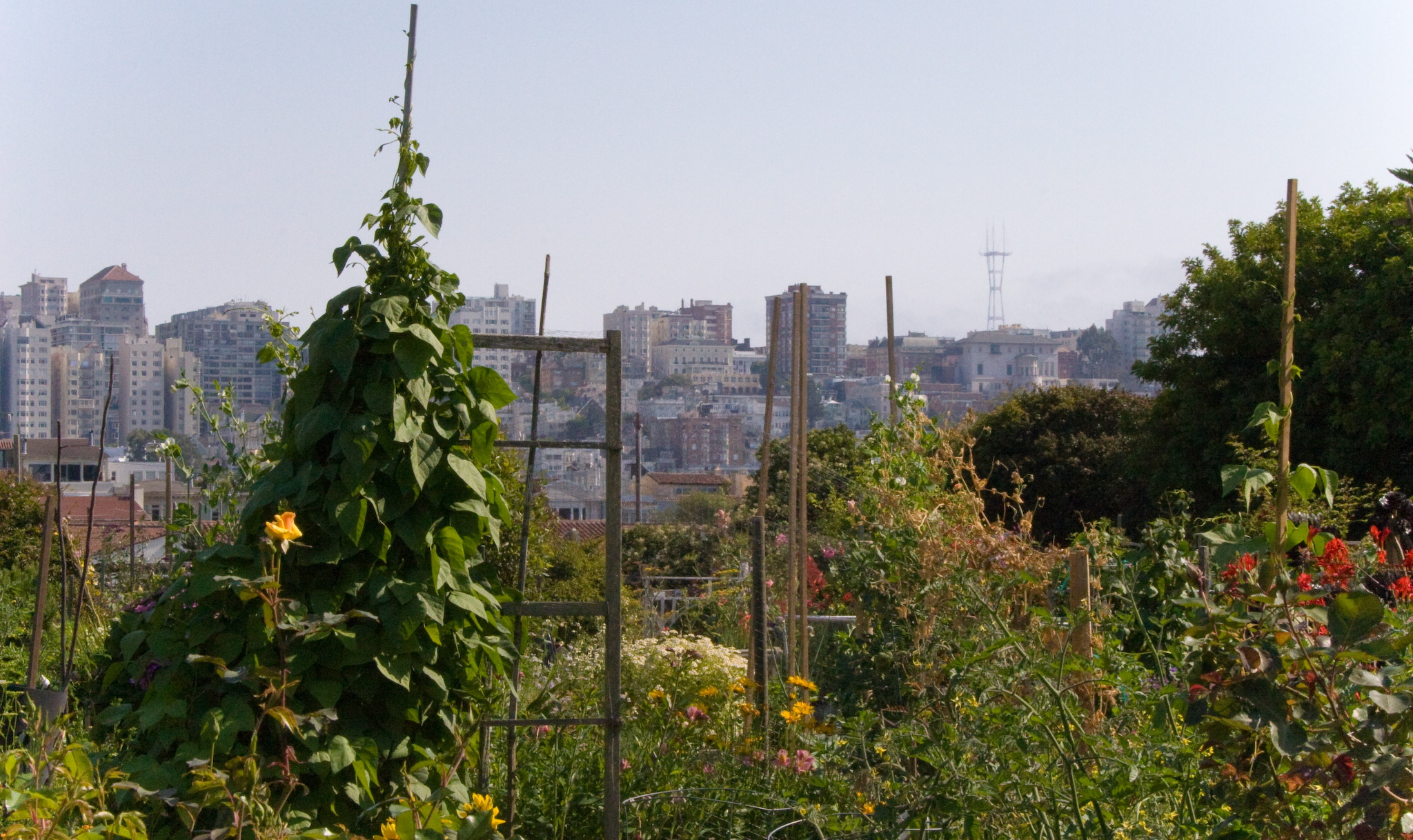 The Agriculture Garden nurtures seasonal crops and is a source of education about nutrition.