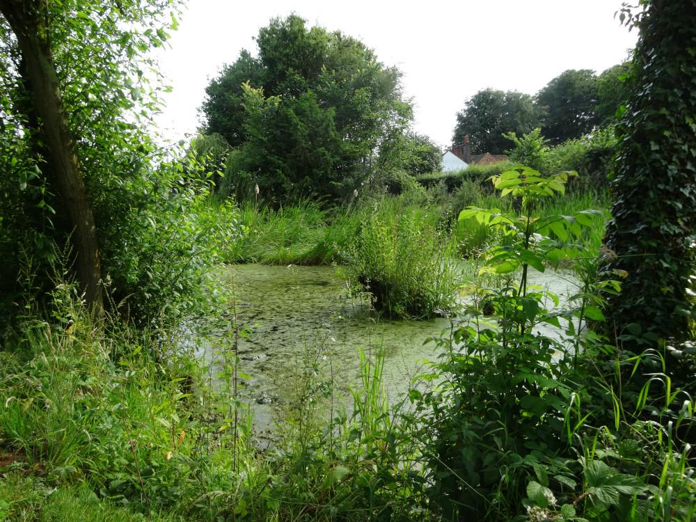 Pallet's Pond. Photo by Stephen Bevan-Pritchard