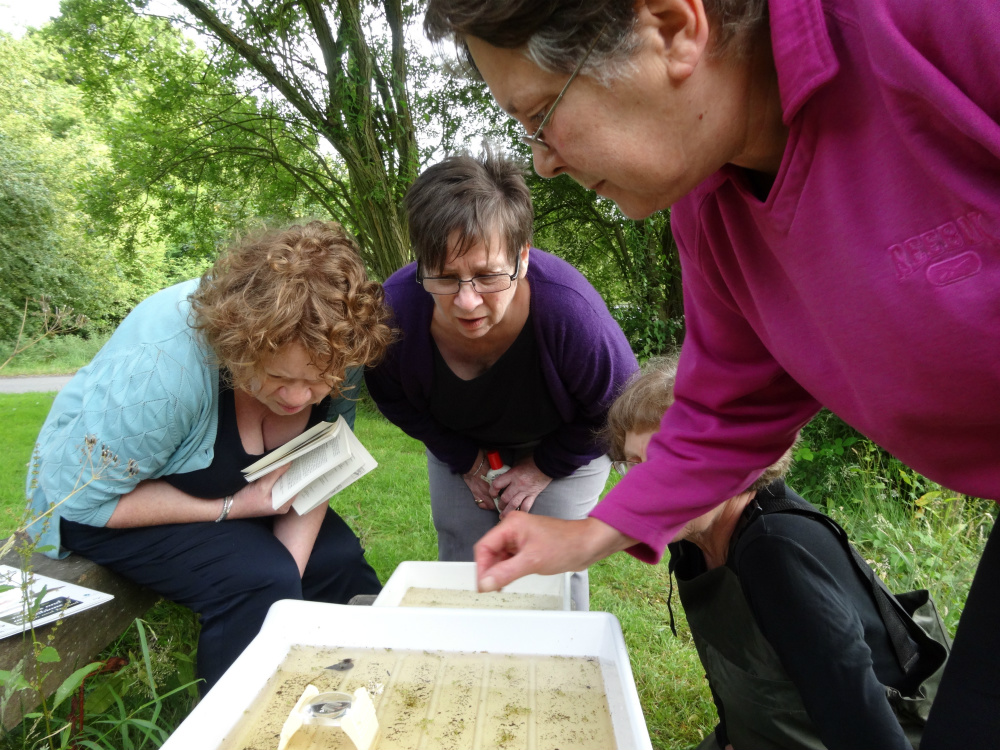 Taking a look at the creatures that live in Pallet's Pond. Photo by Stephen Bevan-Pritchard.