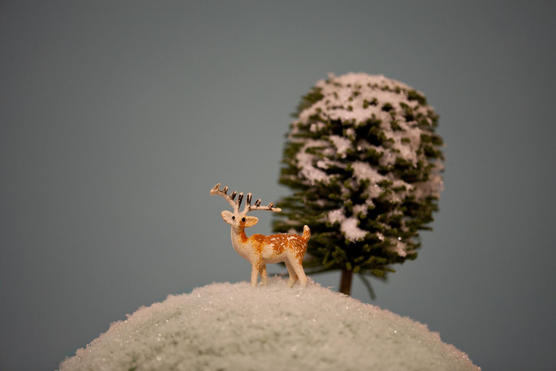Animals14.jpg