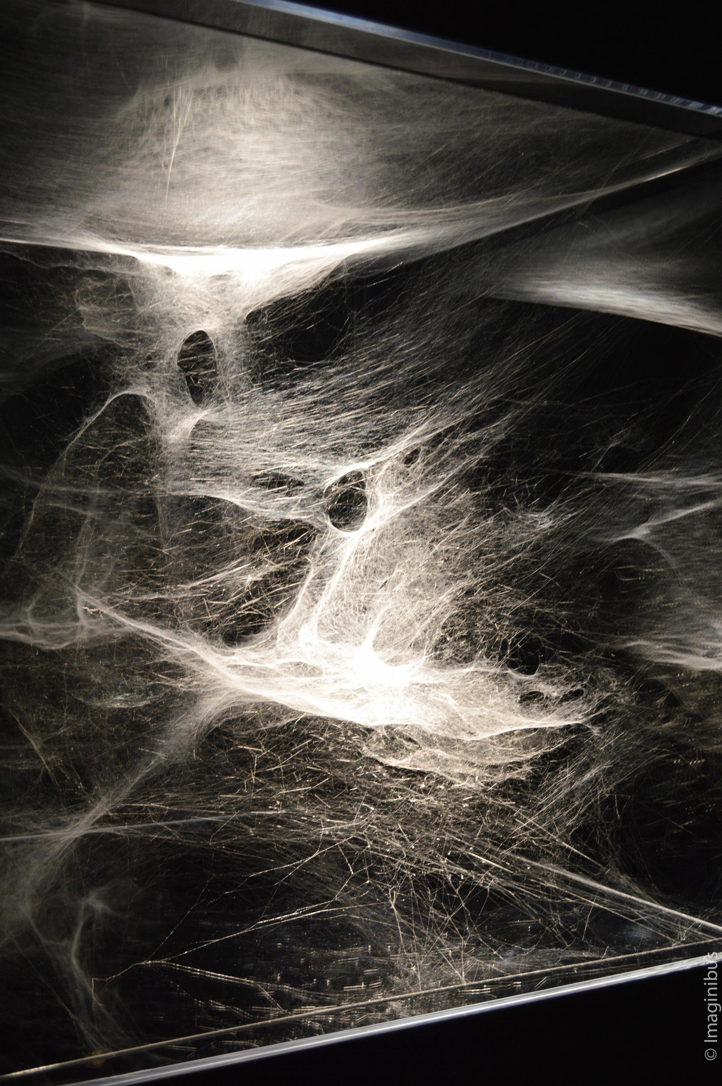 Une brève histoire de l'avenir, Louvre, Spider Webs