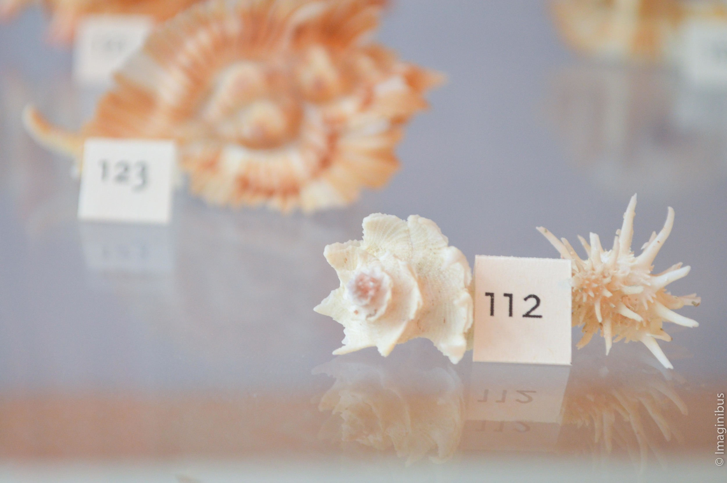 Redpath Museum, Montreal, Shells