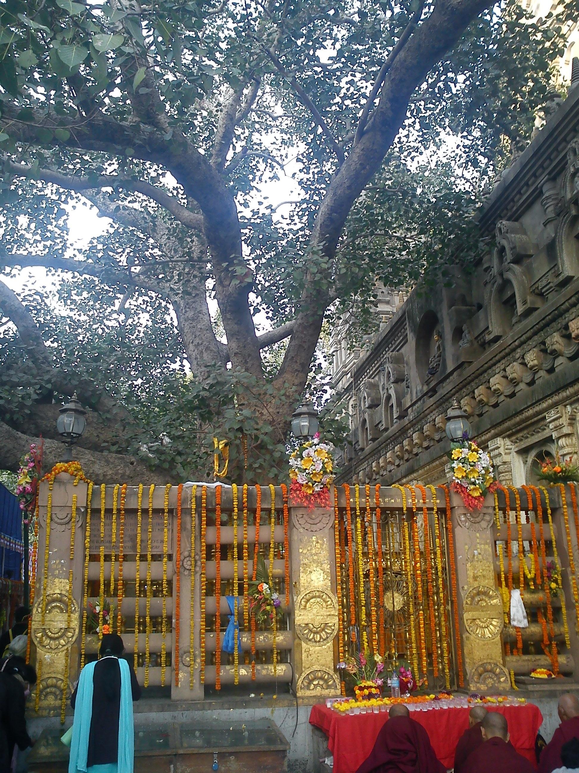 Buddha Tree in Bodhgaya