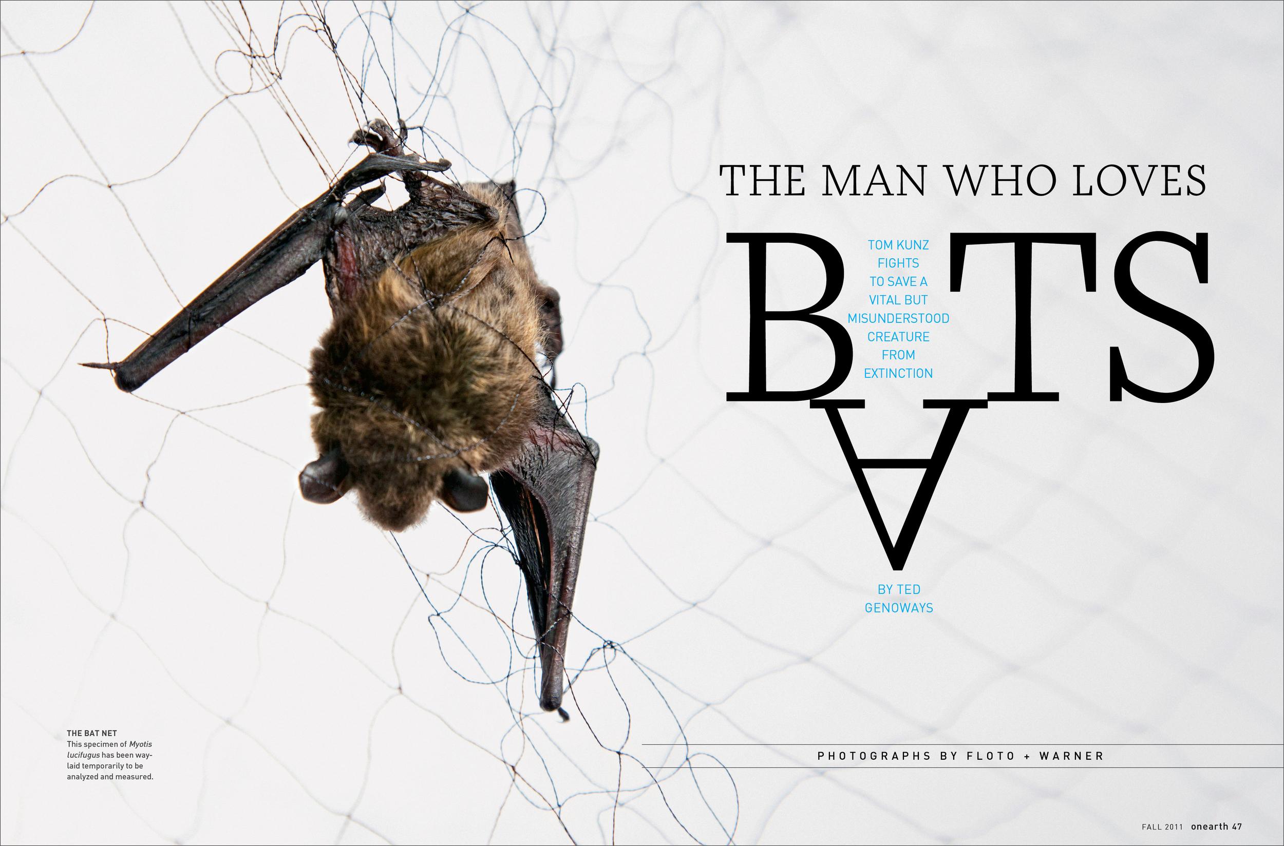 OE_Bats.jpg