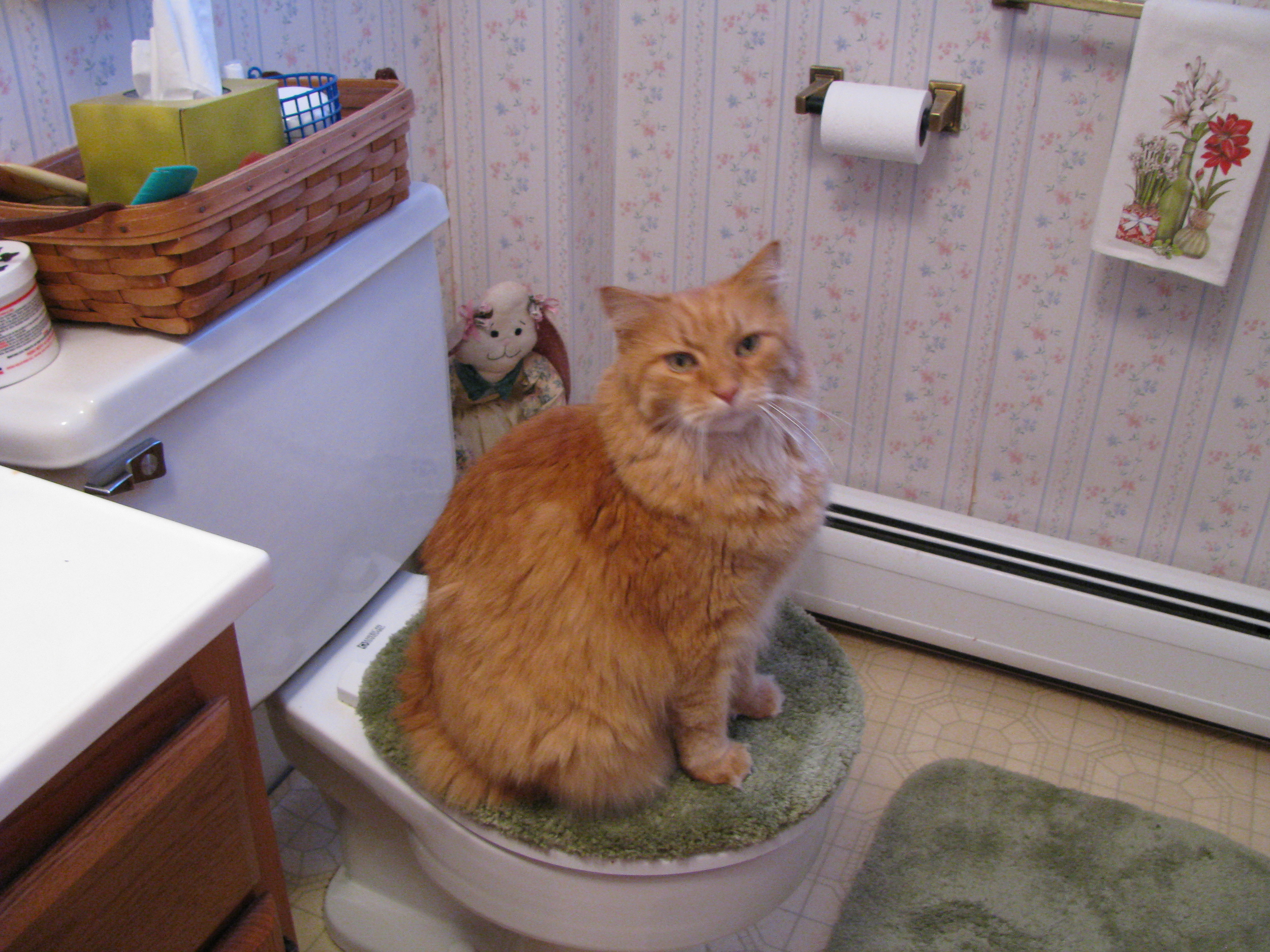 I am potty trained.JPG