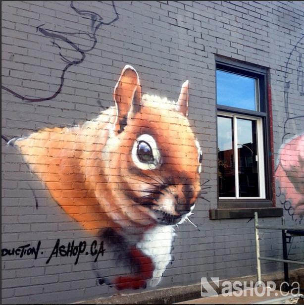 cdn squirrel.jpg