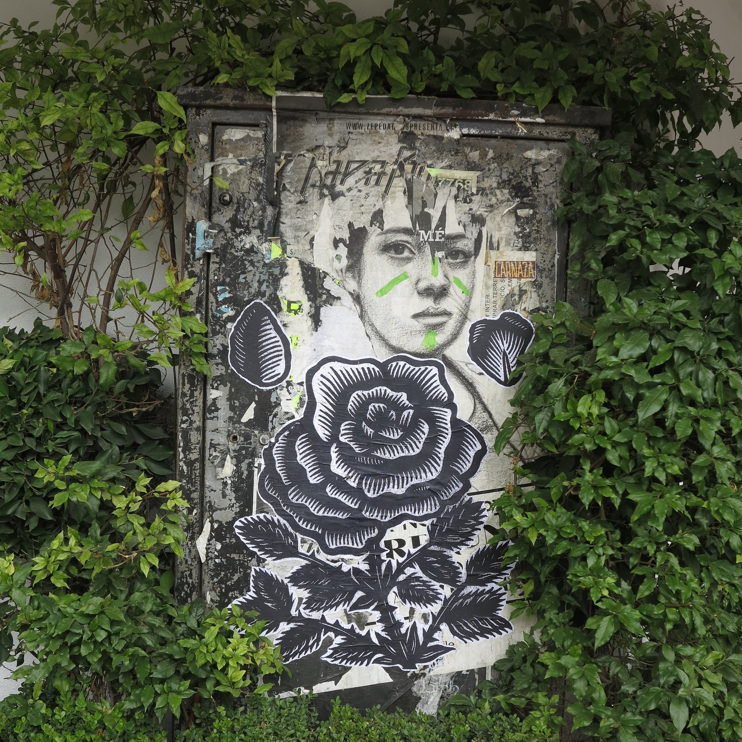 K. Choy,  Rosa  pasteup: Mexico City, DF, Photo Credit: K. Choy