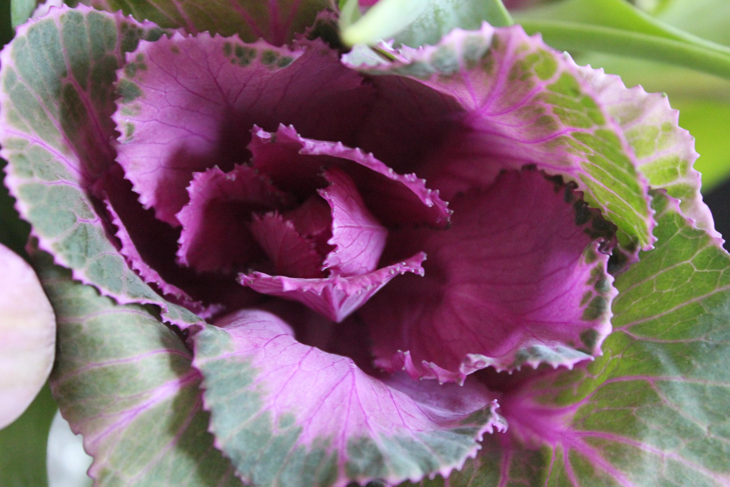 Beautiful kale flowers - Fancy Casual www.fancycasual.com