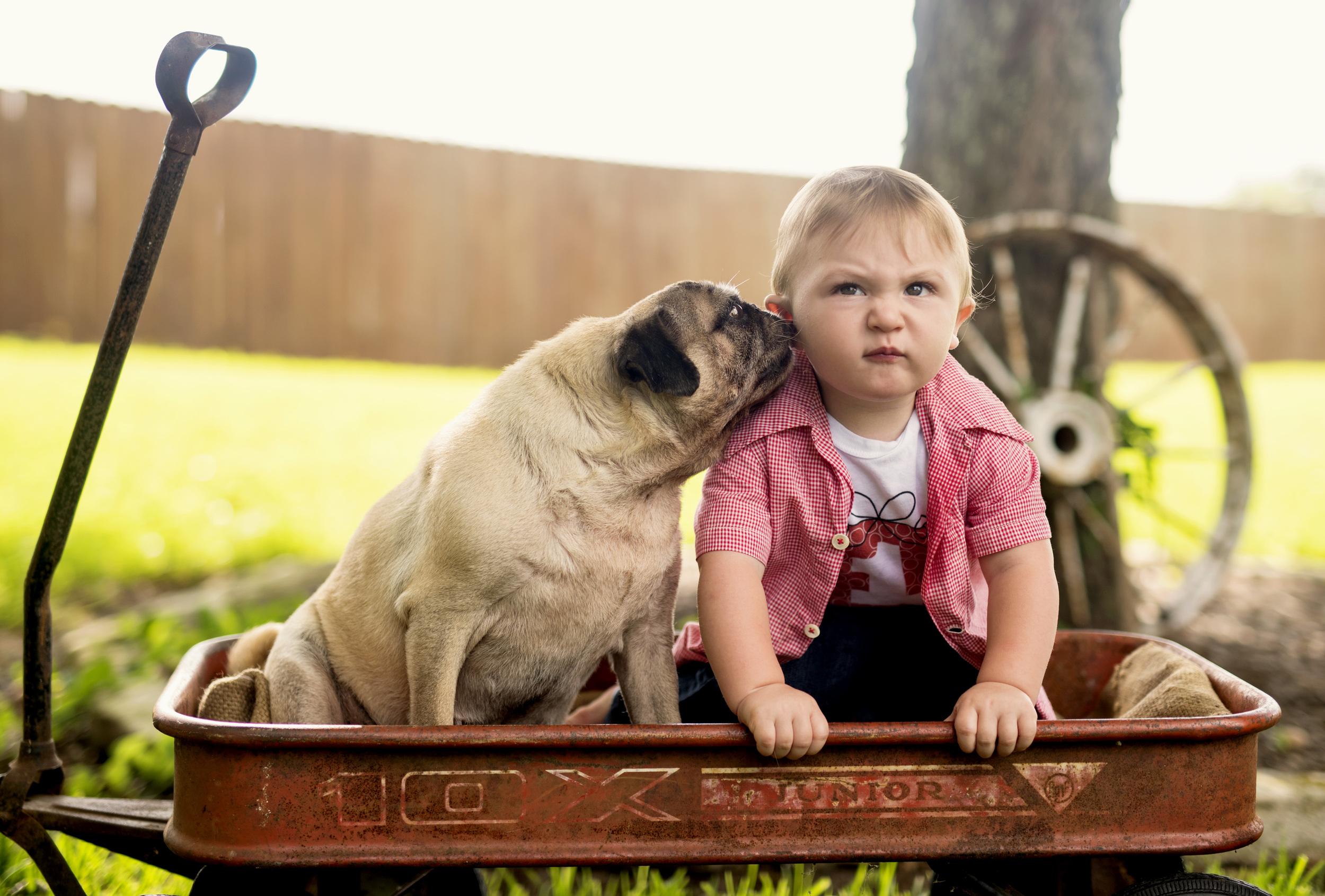 pug and boy 1st year photos