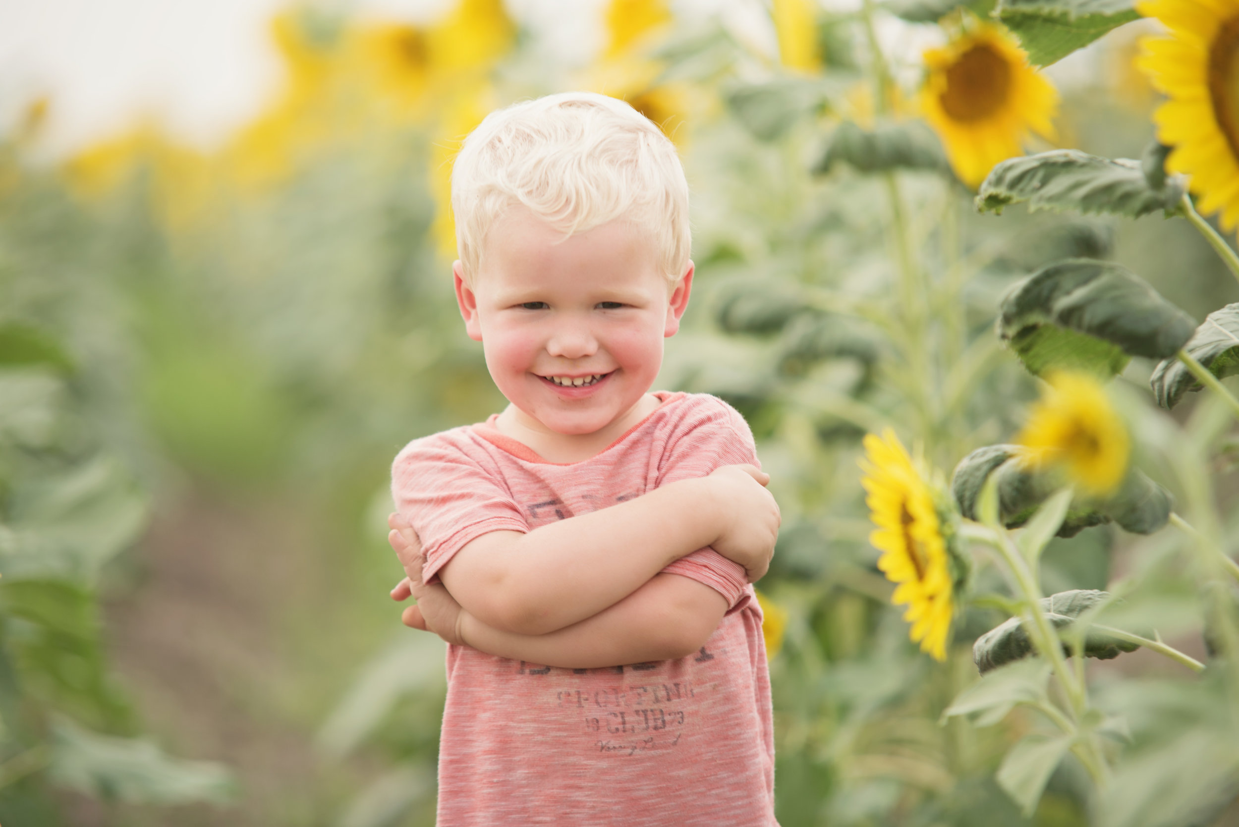 boy in sunflowers photos