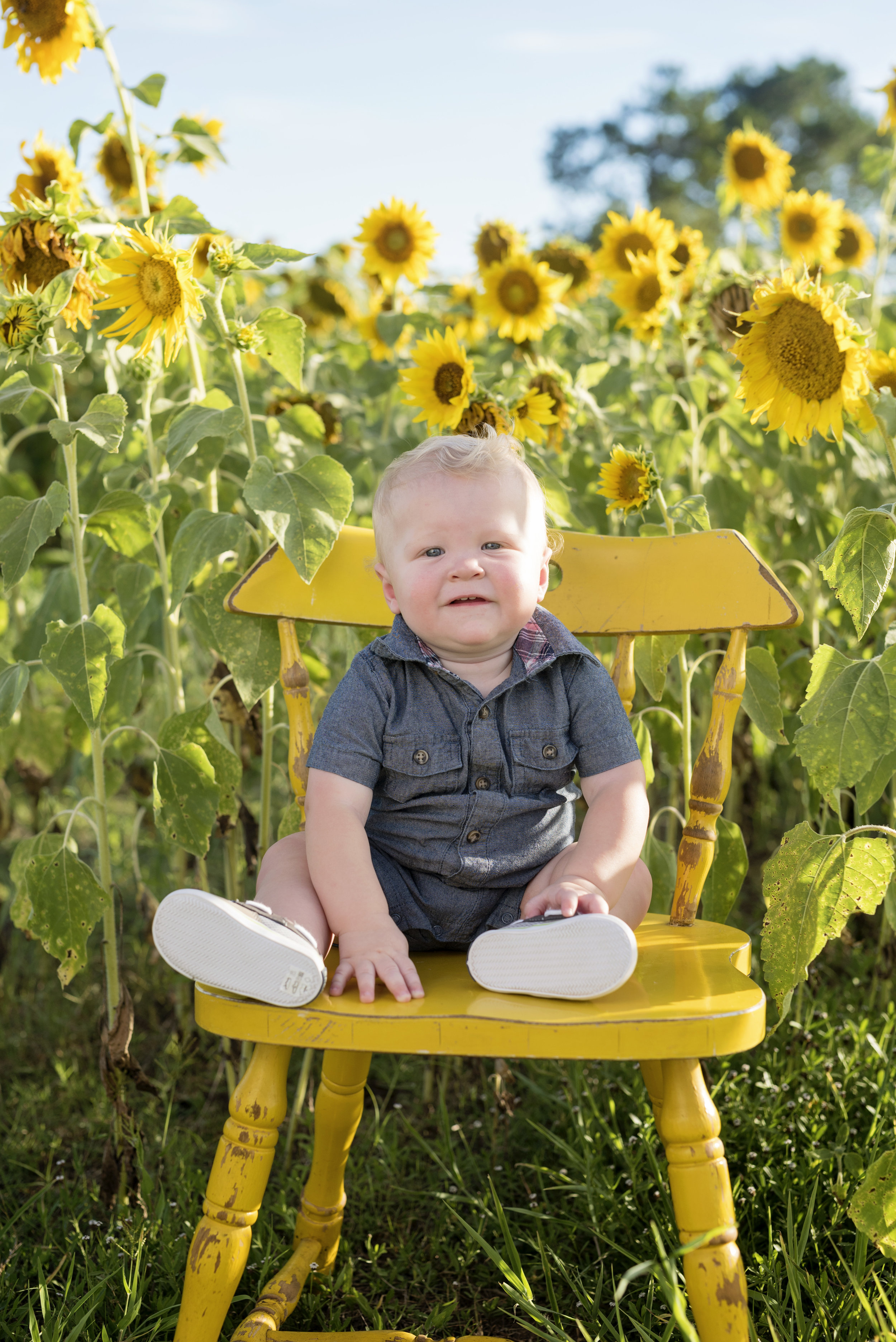 Sunflower Mini Photos Sessions El Campo Texas