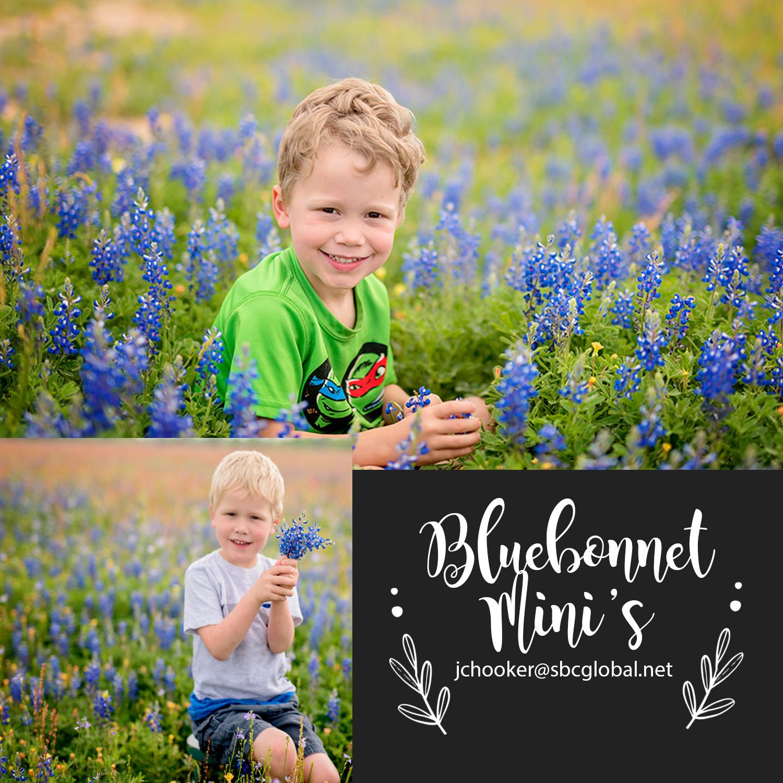 bluebonnet-5x5.jpg